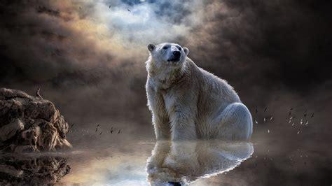 wallpaper polar bear moon reflections man rocks dream