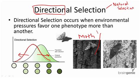 12 3 3 directional selection youtube