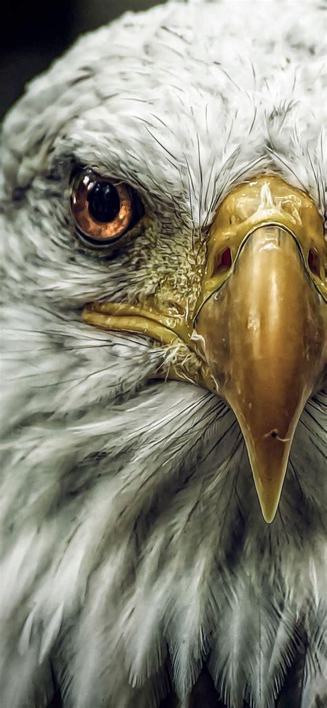 eagle wallpaper  iphone