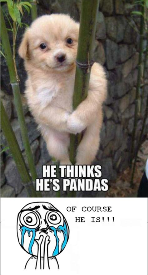 Cute Puppies Meme - cuteness overload thinks puppy panda dump a day