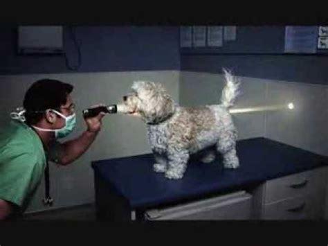 imagenes comicas de animales fotos graciosas de perros gatos y ni 241 s youtube