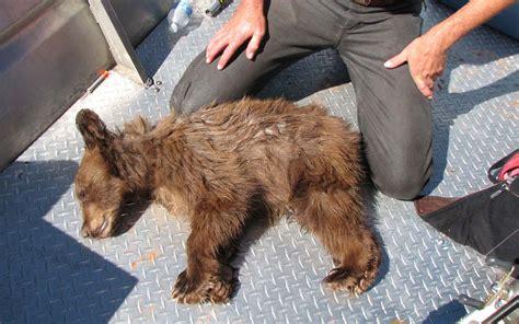 big bear houseboat rentals utah division of wildlife resources can you help me
