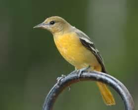 beautiful birds of costa rica