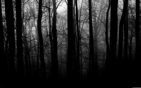 wallpaper black and white trees black and white trees 1920x1200 wallpaper nature trees
