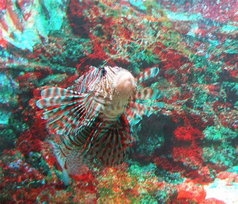3d photo fish in artis zoo 3d photo anaglyph 3d photo taken flickr