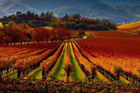 Photo Napa Valley by Road Trip 10 Must See Spots Through Sonoma And Napa