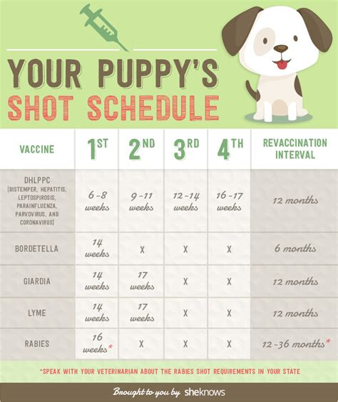 puppy schedule keep your puppy healthy with this vaccination schedule infographic