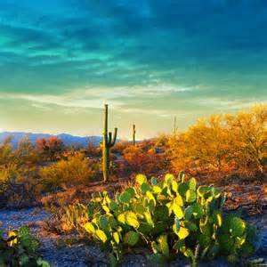 Most Beautiful Places In The United States erika s favorite park saguaro national park oh ranger