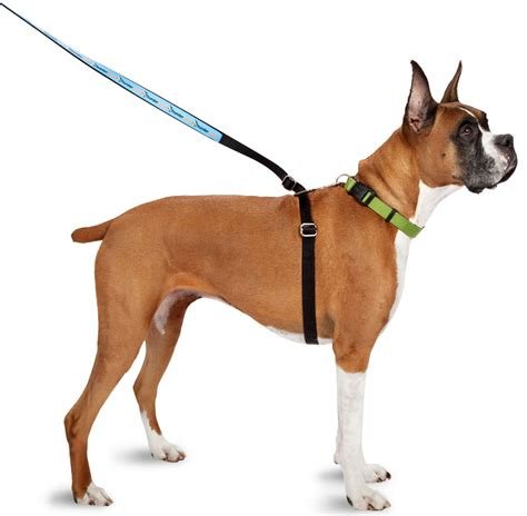 collars for dogs that pull stop your from pulling you on walks petmeds 174 pet health