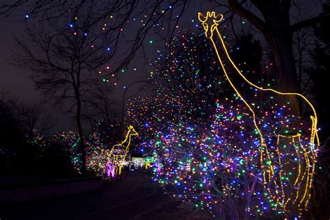 denver zoo lights tickets zoo lights glow packages now on sale news sys con