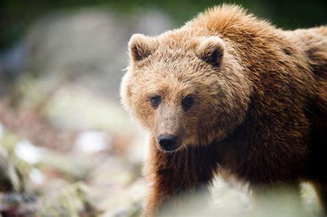 imagenes animales en parque de animales naturlandia