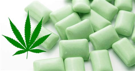 Essential Kitchen Appliances by This Company Is Developing Marijuana Gum For Fibromyalgia
