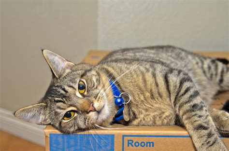 move along tips and tricks for moving with cats