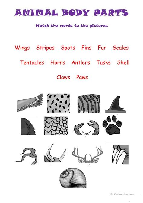 printable animal body parts body parts of animals worksheets for grade 1