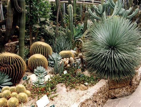 come fare un giardino di piante grasse piante grasse da giardino piante grasse il giardino