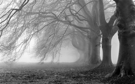 black and white photo best wallpaper photography black and white black and