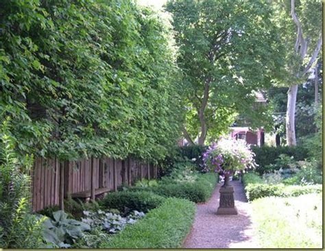 Curb Appeal The Best Privacy Trees What To Plant If You Trees For Privacy In Backyard