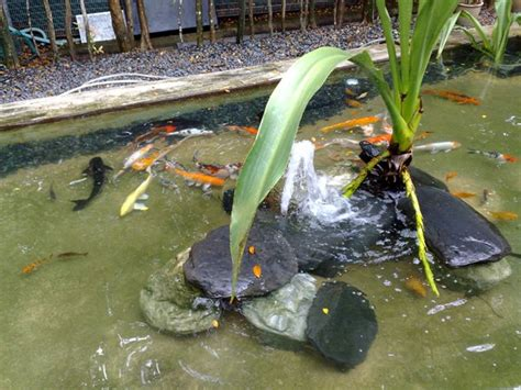 backyard fish pond maintenance what you need to know about regular koi pond maintenance
