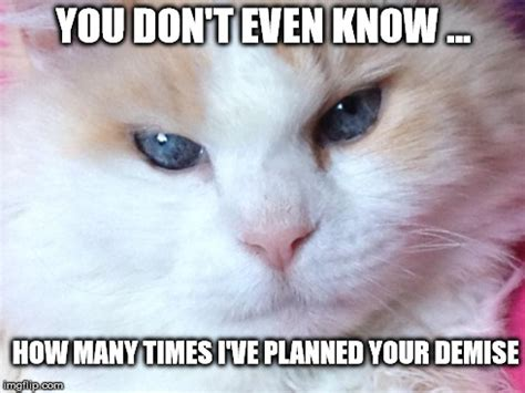 Thinking Cat Meme - what cats are really thinking imgflip