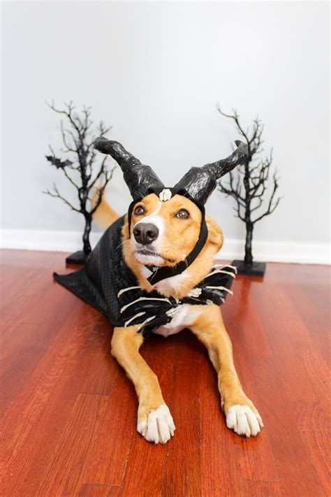 diy dog costume inspired  maleficent  mistress