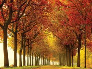 Nature Scene Wall Murals Top 10 The Most Beautiful Nature Scene Large Wall Murals