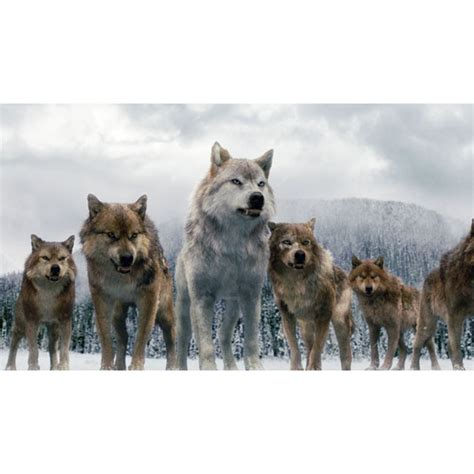 Saga Of The Wolf where wolf in twilight breaking it s all about the