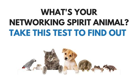 Test To See If Mba Is Right For Me by Take This Test To Discover Your Networking Spirit Animal
