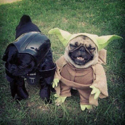 pug yoda costume for sale 1000 ideas about pet costumes on pet costumes costumes and