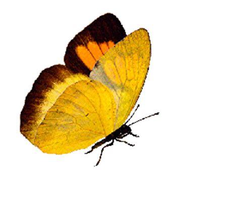 le canapé gif sur yvette de papillons anim 233 s pour vos cr 233 ations