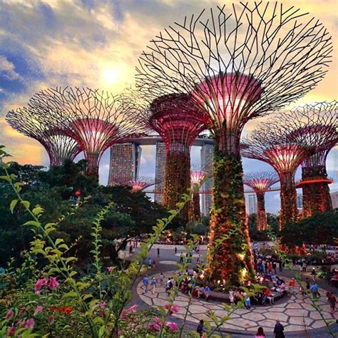 gardens by the bay attractions supertree grove visitor