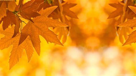 autumn leaves border design ideas wallpaper fr wallpaper
