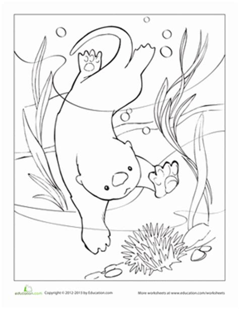Sea Otter Worksheet Education Com Sea Otter Coloring Page