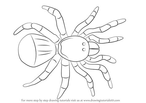 trapdoor spider coloring page learn how to draw a trapdoor spider arachnids step by
