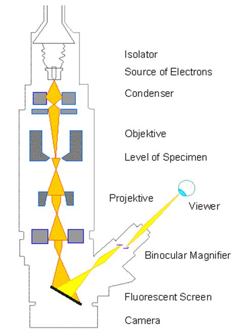 diagram of electron microscope botany microscopy electron microscopy