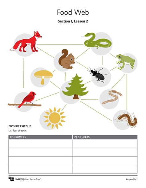 Food Web Worksheets by Quot Food Web Quot Worksheet Fifthgrade Science