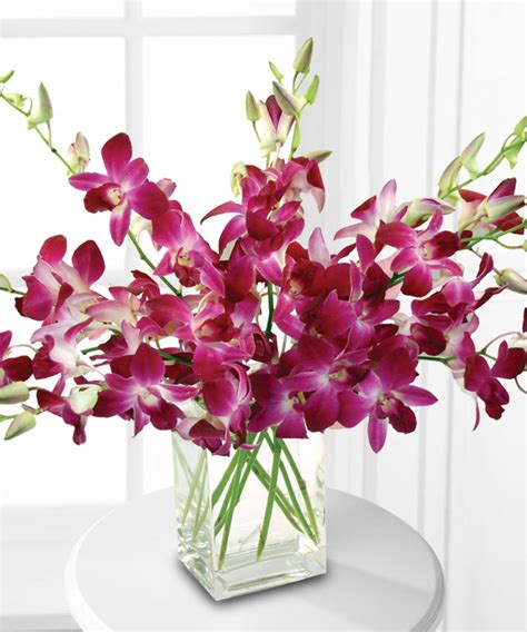 Orchids In A Vase by Dendribium Orchids In Vase Boston Ma Central Square Florist