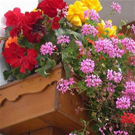 fiori finti per balconi consegna piante per il balcone