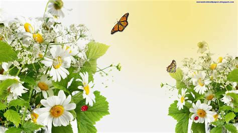 Beatiful Butterflfy On Flowers Wallpapers 2013 Hd For