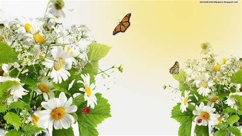 Beatiful Butterflfy On Flowers Wallpapers 2013 Hd For
