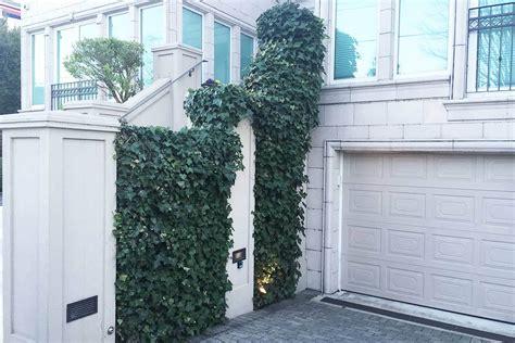 climbing plants for walls evergreen 3 evergreen wall climbing plants for shade and privacy