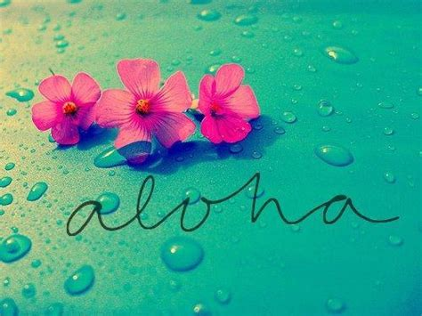wallpaper tumblr aloha pink hawaiian flowers tumblr