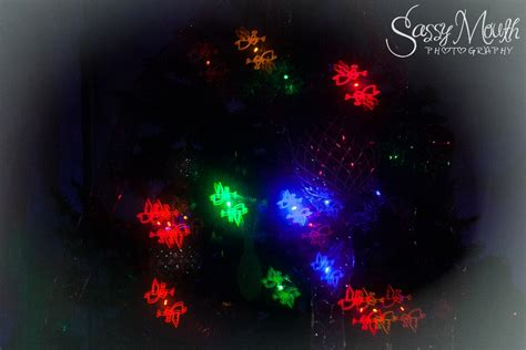 nights of shimmering lights nights of shimmering lights dover florida sassy mouth