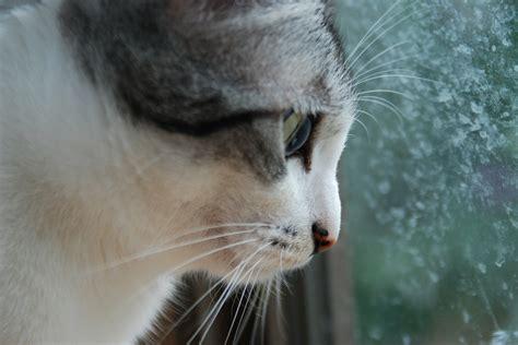 katzengerechte wohnung wohnungskatzen 10 tipps f 252 r eine katzengerechte wohnung
