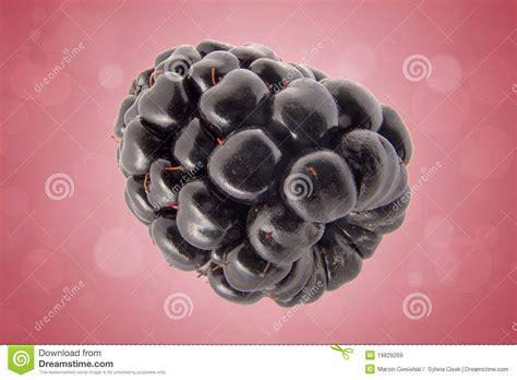 Blackbarry Jump Fruit blackberry fruit royalty free stock images image 19829269