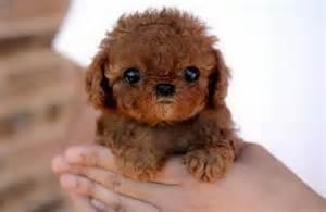 фотографии собачек маленькой породы