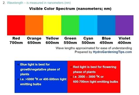 what color light do plants grow best in what color light do plants grow best in 100 images