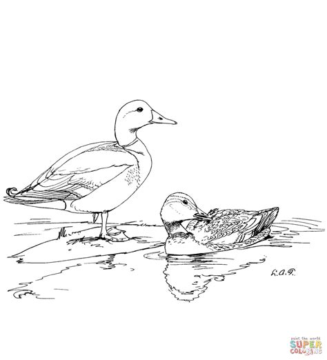 two mallard ducks coloring page free printable coloring