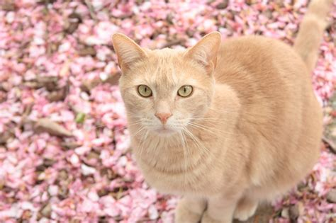 Cats Pink cat in pink colors wallpapers and images wallpapers