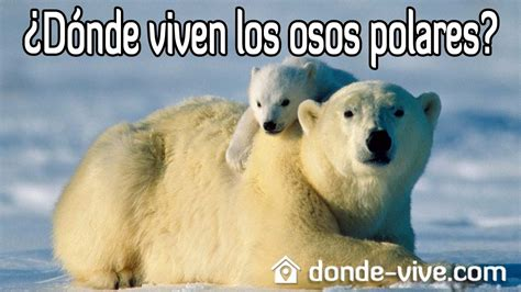 libro oso polar oso polar 191 d 243 nde viven los osos polares youtube
