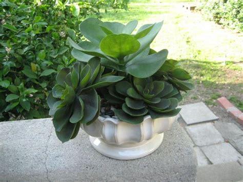 piante finte da giardino piante grasse finte piante finte piante grasse finte